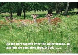 Beautiful Deer Quotes Best of Deer Image Quotation 24 Sualci Quotes
