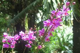 amazon rainforest endangered plants. Perfect Amazon Orchids In Amazon Rainforest Endangered Plants I