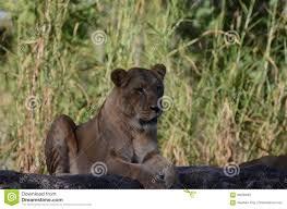 animals in busch garden