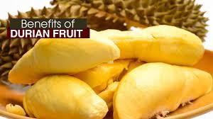 ผลการค้นหารูปภาพสำหรับ durian fruit