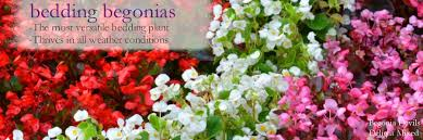our ever growing range of bedding nia plug plants including nia orangdy and nia nonstop