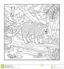 coloring book jaguar ilration letter j stock vector ilration