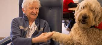 Image result for aged care facility pets