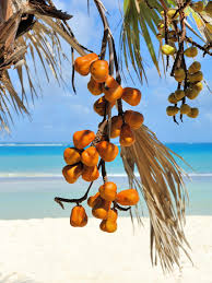 Complete Dog Care Guide Are Palm Tree Seeds Poisonous To DogsPalm Tree Orange Fruit