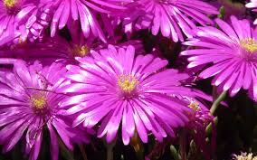 Download Original Resolution Warna Warni Bunga Cantik Hd