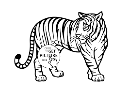 Coloring Pages Tiger Real Coloring Page Pictures Of Animals For