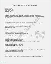 Free Download Resume Format Pdf Blank Check Template Pdf