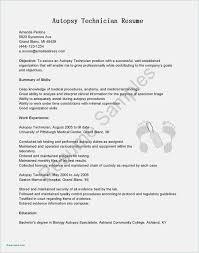 Free Download Resume Format Pdf Blank Check Template Pdf