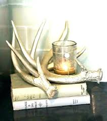 deer antler wall decor ideas white antlers shed display antle