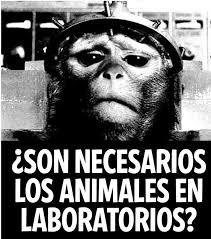 Resultado de imagen para marcas que experimentan con animales}