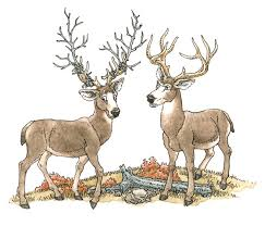 Antlers Big And Small
