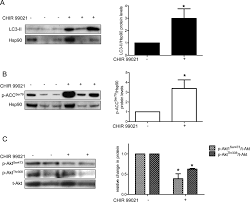 knockdown of gsk3β increases basal autophagy and ampk signalling figure