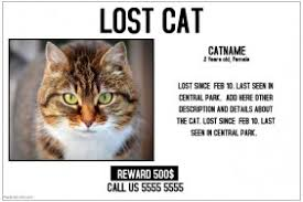 Missing Cat Poster Template 140 Customizable Design Templates For Cat Postermywall