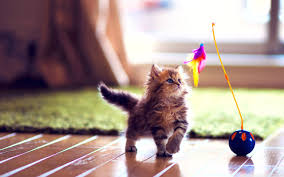 cute kittens playing wallpaper. Unique Playing Wide  Intended Cute Kittens Playing Wallpaper U