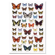 Moth Identification Chart Details About British Butterflies Butterfly A5 Identification Card Chart Postcard New