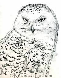 Small Picture Snowy Owl Sketch Paintings of Wildlife Nature by Rebecca Latham