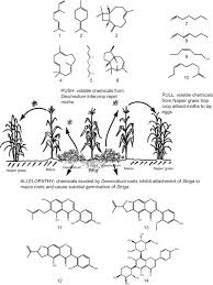 companion planting an overview