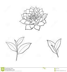 Vector цветок лотоса эскиза установленные листья чая иллюстрация