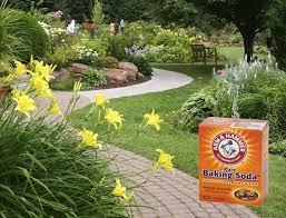Google Garden Design Unique 48 Baking Soda Uses In The Garden Baking Soda For Plants Balcony