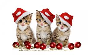 cute animal christmas backgrounds.  Animal Cute Animal Christmas Wallpaper 04 Throughout Backgrounds