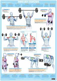 Back Exercises Gym Chart Shoulder Muscles Weight Training And Body Building Poster Gym Exercise Chart Ebay