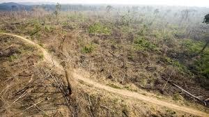 amazon rainforest deforestation. Interesting Rainforest Section Of The Amazon Rainforest In State Para Illegally Cleared  082014 For Rainforest Deforestation F
