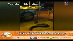 เรื่องเล่าเช้านี้ คลิประทึก  งูเหลือมตัวยักษ์เลื้อยผ่านร้านก๋วยเตี๋ยวในอยุธยา (10 ก.พ.58) - YouTube
