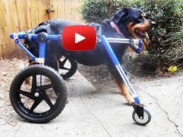 four wheel dog wheelchair