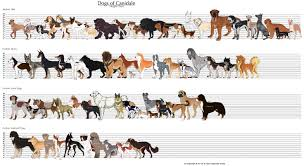 25 Images Dog Breed Chart