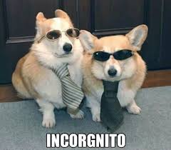 Image result for corgi memes