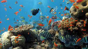 4K Ultra HD Underwater Wallpapers HD ...
