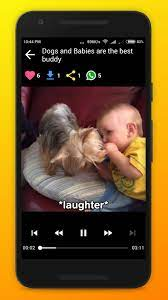 Funny Dog Video, Memes, Wallpapers para ...