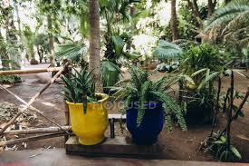 yellow pots with beautiful green plants