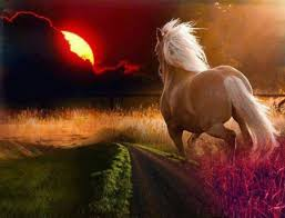 horses running in the sunset.  Horses Horse Running At Sunset For Horses In The