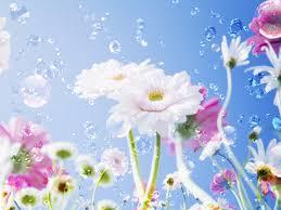 most beautiful flower wallpaper