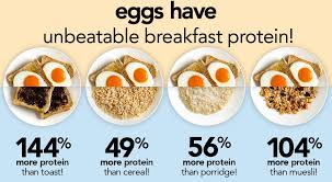 Image result for protein eggs