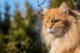 Kočka Kocovina červená Fotografie Zdarma Na Pixabay
