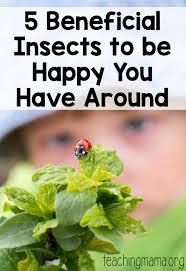 insect facts for kids