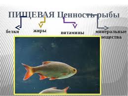 Проект по технологии Рыба в кляре  ПИЩЕВАЯ Ценность рыбы белки жиры витамины минеральные вещества