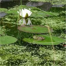 Bassin extérieur avec voiles de chine - Page 3 Images?q=tbn:ANd9GcQFPvEgzJn9xaBCMD-NY80TadYAMZTboZgklCQoFk6gXq_nzDCu