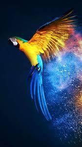 Parrot Security Os Wallpaper Hd ...