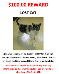 Make A Missing Poster Lost Cat Template Missing Flyer Best Design On Poster How Make A Pos 24