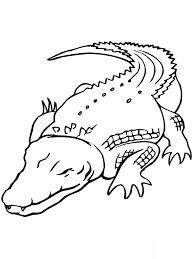 Grande Coccodrillo Disegno Da Stampare E Da Colorare In Animali