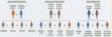 Inheritance Patterns Magnificent Genetic Diseases Body Causes What Is Heredity