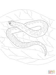 Small Picture Hognose Snake coloring page Free Printable Coloring Pages