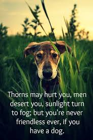Dog Death Quotes 65 Inspiration 24 Inspirational Dog Quotes About Life And Love PlayBarkRun