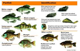 Bass Species Chart Sunfishes