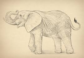 easy animals to draw realistically. Easy Animals To Draw Realistically How To Draw Animals Envato Tuts Design Illustration Intended Easy Realistically