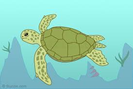 Small Picture Turtle Drawing Color Image Gallery HCPR