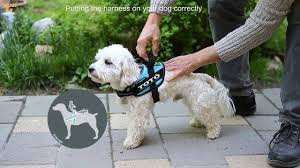 Julius K9 Power Harness Sizing Chart Idc And K9 Harnesses Proper Sizing Of Harness